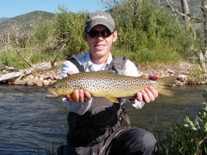 BIG Provo River Brown Trout