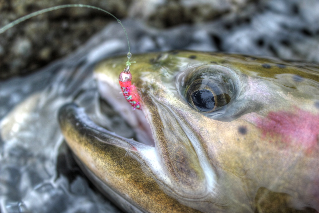 Pink Scud for Steelhead
