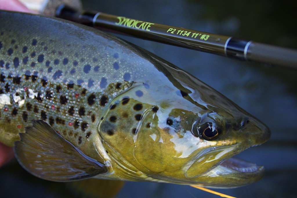 Syndicate Fly Rods